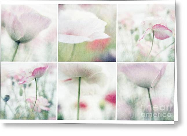 Poppyflowers Greeting Cards - Suffused With Light Collage Greeting Card by Priska Wettstein