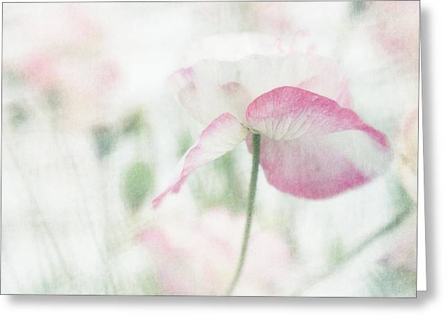 Airy Greeting Cards - suffused with light I Greeting Card by Priska Wettstein