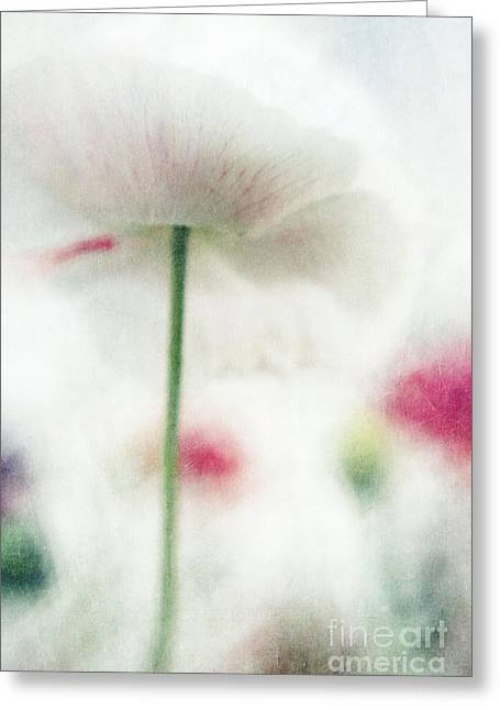 Poppyflowers Greeting Cards - suffused with light V Greeting Card by Priska Wettstein
