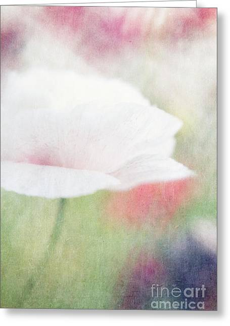 Poppyflowers Greeting Cards - suffused with light VI Greeting Card by Priska Wettstein