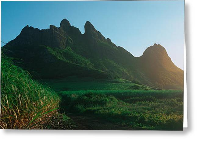 Mauritius Greeting Cards - Sugar Cane Crop In A Field, Trois Greeting Card by Panoramic Images
