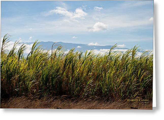 Most Popular Photographs Greeting Cards - Sugar Cane Field - Maui Greeting Card by Paulette B Wright
