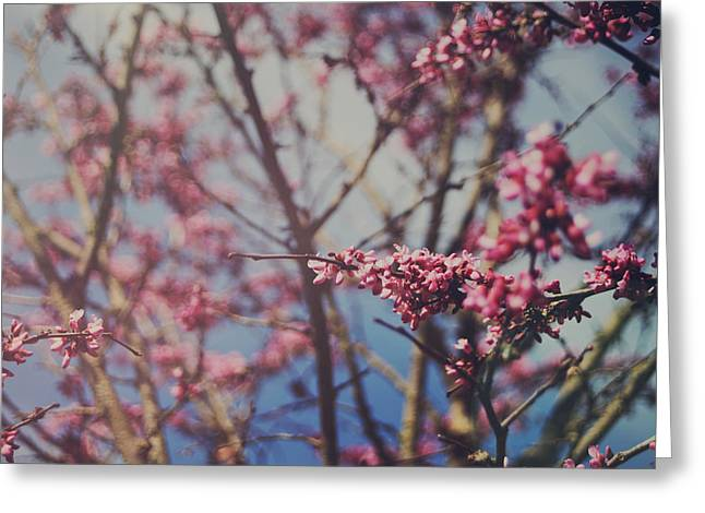 Pink Flower Branch Photographs Greeting Cards - Sugar Greeting Card by Laurie Search