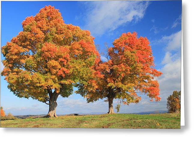 Pollux Greeting Cards - Sugar Maples on Hilltop in Autumn Greeting Card by John Burk