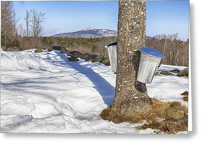 Sugaring Season Greeting Cards - Sugar Season Greeting Card by Carol Menard