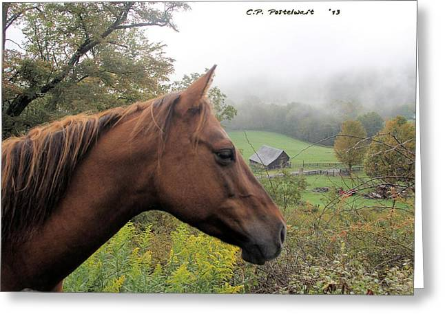 Randolph County Wv Greeting Cards - Sugar watching over her Home Greeting Card by Carolyn Postelwait