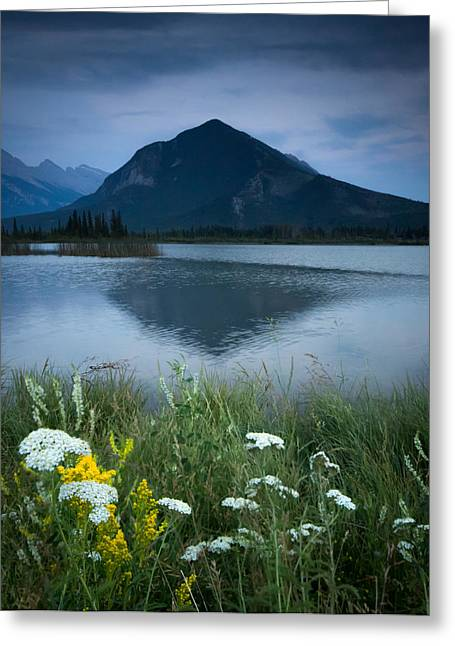 Banff Canada Greeting Cards - Sulphur Mountain and Wildflowers Greeting Card by Cale Best