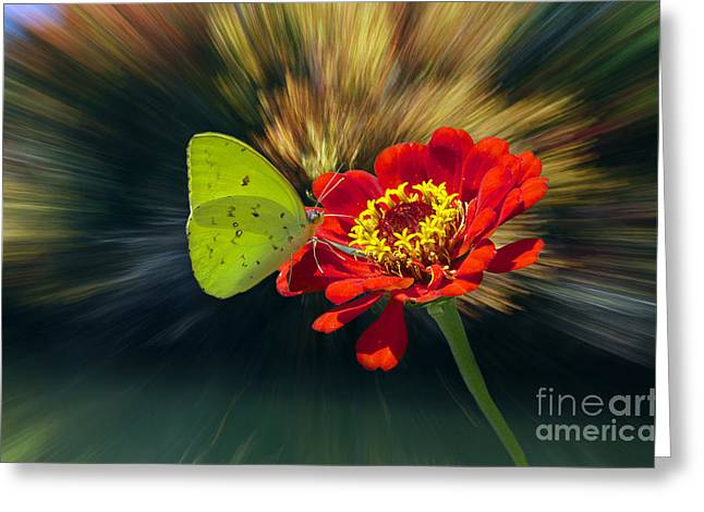 Flying Spider Greeting Cards - Sulphur Greeting Card by Skip Willits