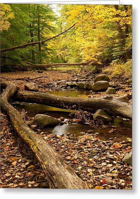 Sulphur Spring Greeting Cards - Sulphur Springs Greeting Card by Shannon Workman