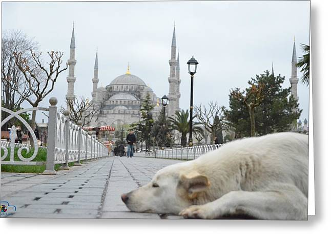 Istanbul Pyrography Greeting Cards - SultanAhmet Mosque Greeting Card by Emrah  Duman
