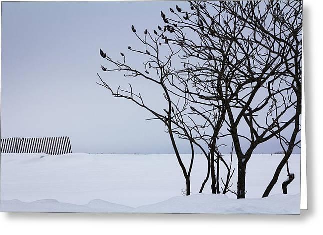 Barbara Smith Greeting Cards - Sumac in Snow Greeting Card by Barbara Smith