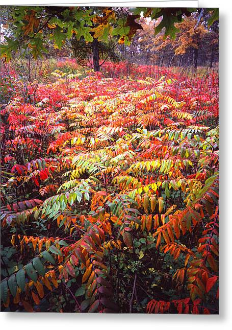 Hack-ma-tack National Wildlife Refuge Greeting Cards - Sumac Surprise Greeting Card by Ray Mathis