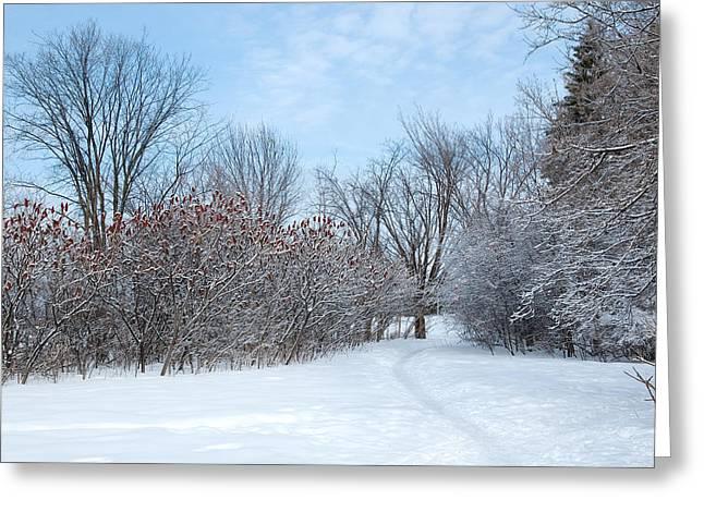 Ottawa Greeting Cards - Sumacs alongside the path. Greeting Card by Rob Huntley