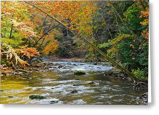 Unrealistic Greeting Cards - Summer and Autumn Collide Greeting Card by Frozen in Time Fine Art Photography