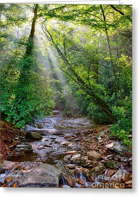 Creek Framed Prints Greeting Cards - Summer Arrives on the Blue Ridge Parkway I Greeting Card by Dan Carmichael