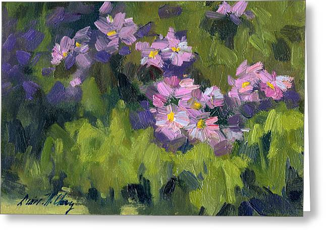 Aster Greeting Cards - Summer Asters Greeting Card by Diane McClary
