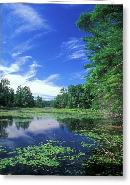 Union Connecticut Greeting Cards - Summer at Breakneck Pond Greeting Card by John Burk