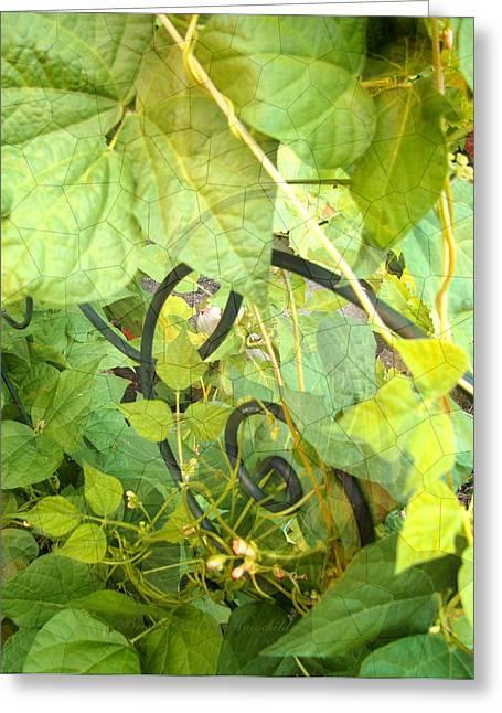 Green Beans Greeting Cards - Summer Beans Make Me Feel Fine Greeting Card by Brooks Garten Hauschild