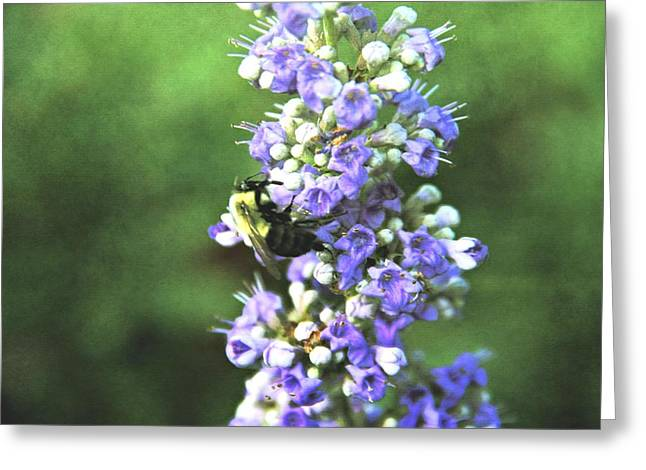 Stinger Greeting Cards - Summer Bee Greeting Card by Dan Sproul