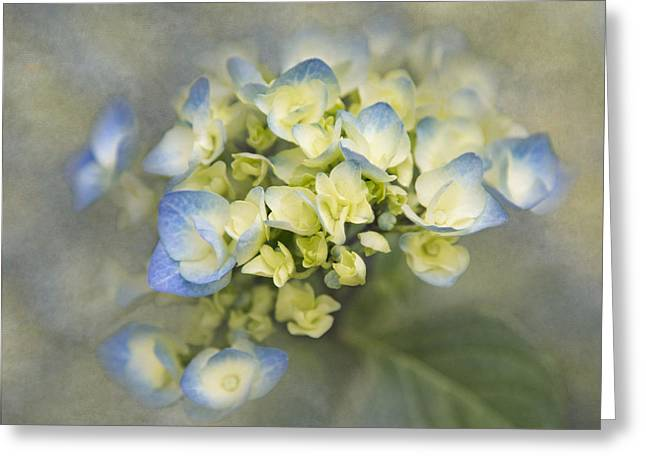 Color Enhanced Greeting Cards - Summer Begins Greeting Card by Angie Vogel