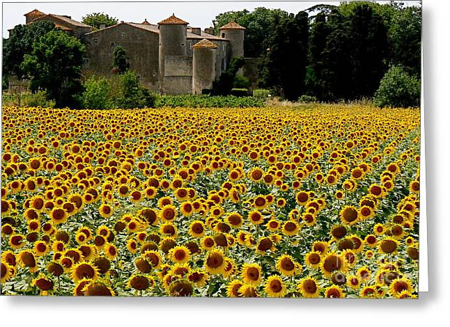 Languedoc Greeting Cards - Summer Bliss Greeting Card by France  Art