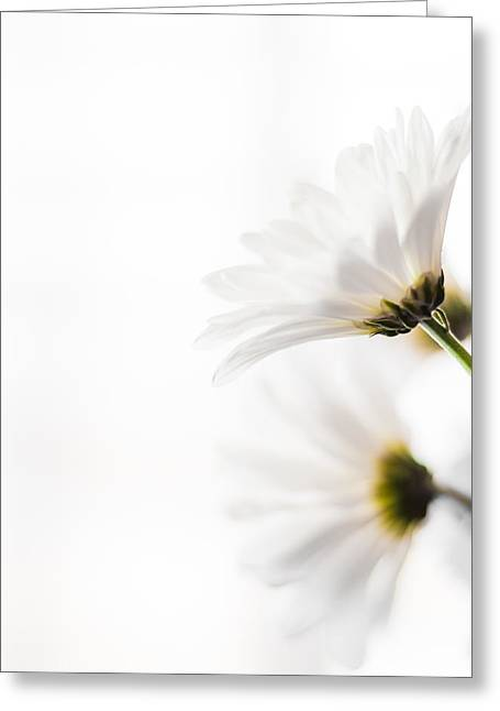 Bellis Greeting Cards - Summer Bliss Greeting Card by Shelby  Young