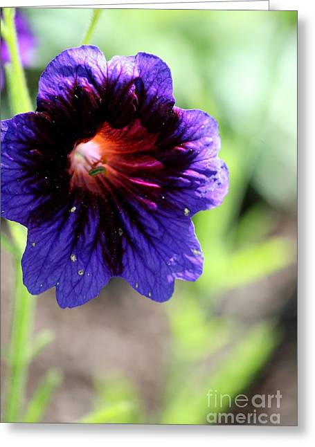 Wildflower Photos Greeting Cards - Summer Blue  Greeting Card by Neal  Eslinger