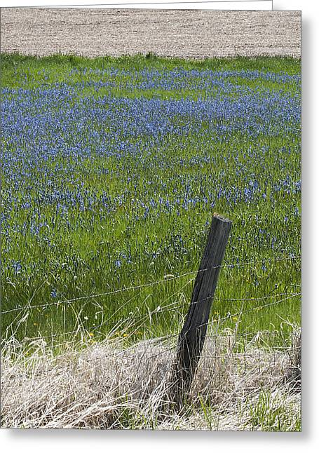 Contour Plowing Greeting Cards - Summer Blues Greeting Card by Doug Davidson