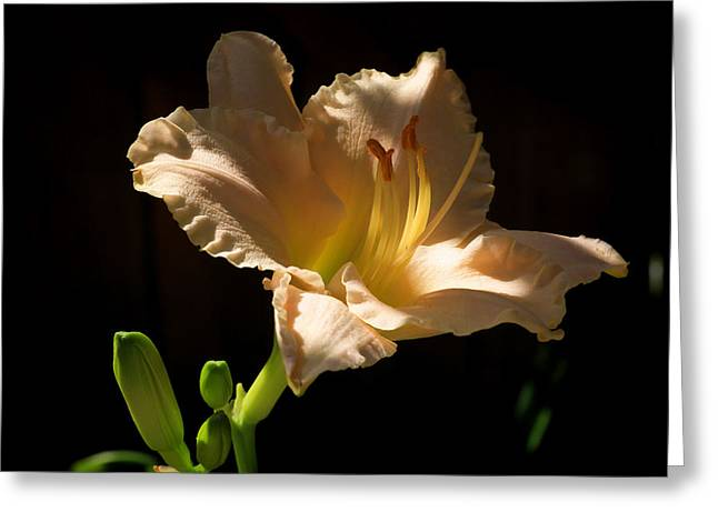 Day Lily Greeting Cards - Summer Bounty Greeting Card by Donna Kennedy