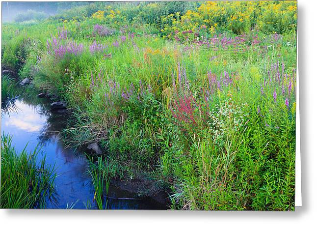 Connecticut Scenery Greeting Cards - Summer Bouquet Greeting Card by Bill  Wakeley