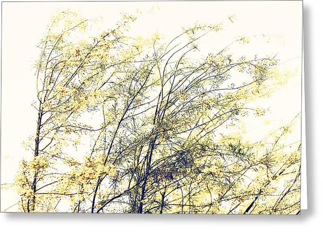 Breezy Greeting Cards - Mesquite flowers in Summer Breeze 141c Greeting Card by Nasser Studios