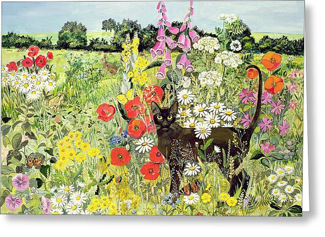 Hare Photographs Greeting Cards - Summer Cat Greeting Card by Hilary Jones