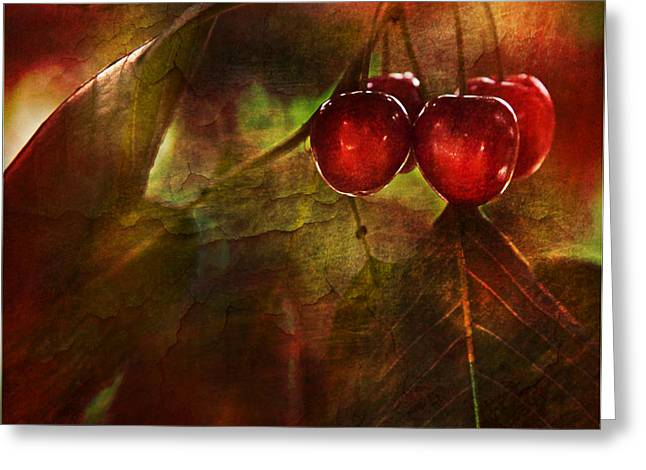 Canadian Photographer Greeting Cards - Summer Cherries 2 Greeting Card by Theresa Tahara