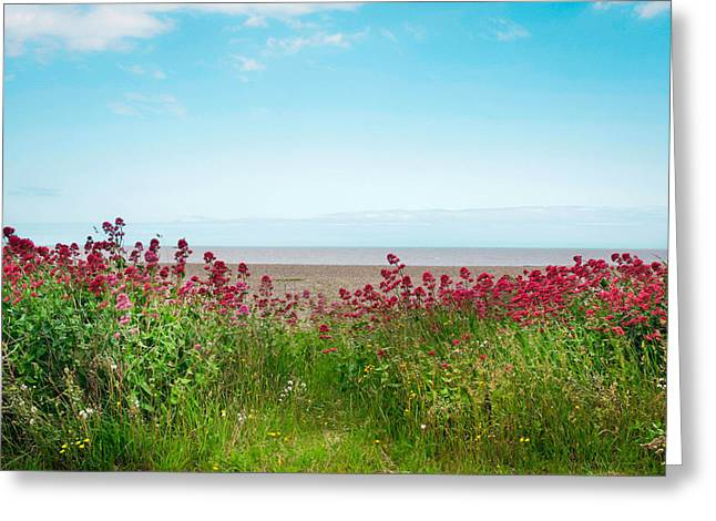 Paradise Meadow Greeting Cards - Summer coastal scene Greeting Card by Tom Gowanlock