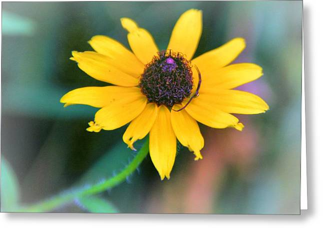 Flora Photographs Greeting Cards - Summer Color Greeting Card by Dan Sproul