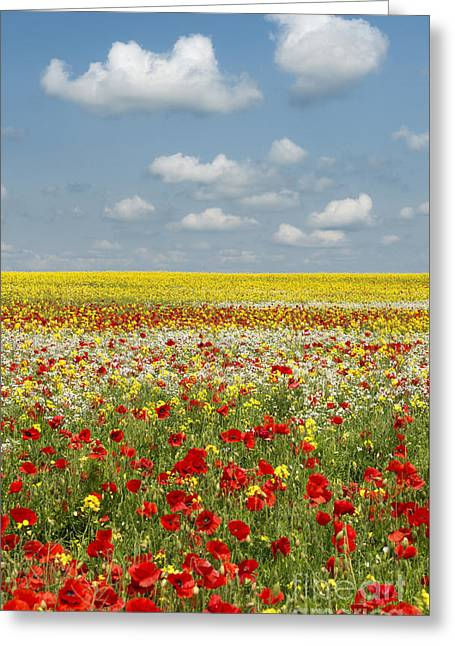 Summer Colours Greeting Card by Tim Gainey