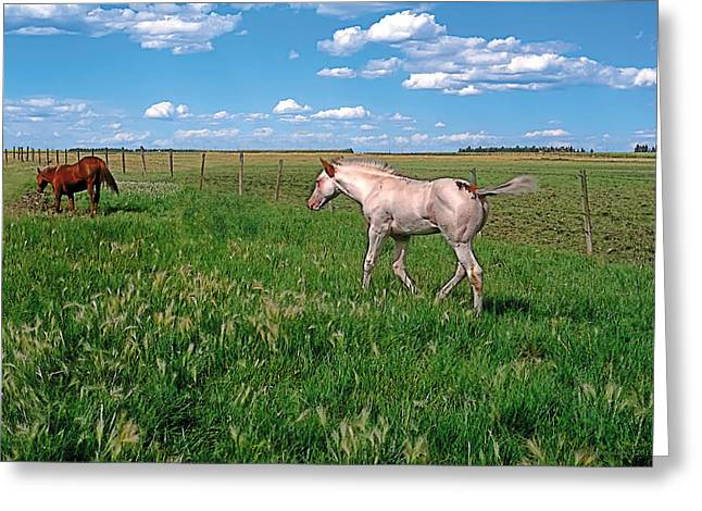 Nostalgic Greeting Cards - Summer Colt Greeting Card by Terry Reynoldson