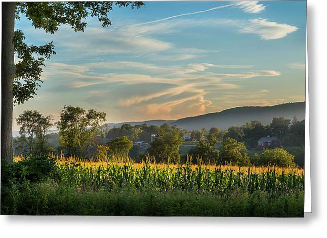 Working Farms Greeting Cards - Summer Corn Greeting Card by Bill  Wakeley