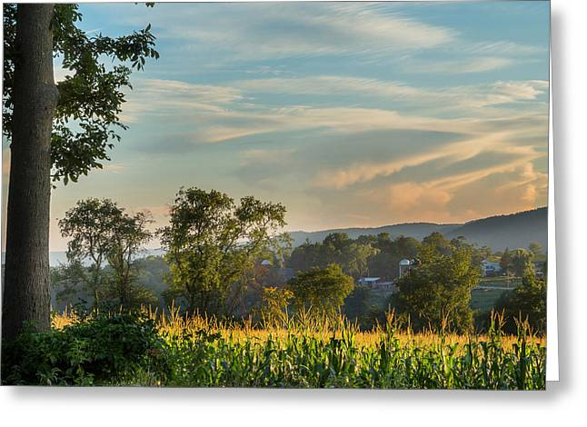 Cornfield Greeting Cards - Summer Corn Square Greeting Card by Bill  Wakeley