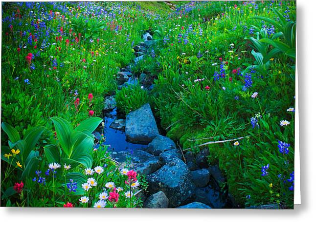 Summer Creek Greeting Card by Inge Johnsson