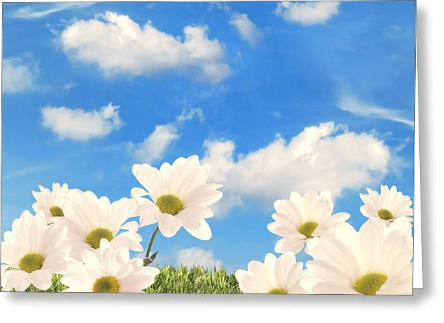 Lawn Greeting Cards - Summer Daisies Greeting Card by Amanda And Christopher Elwell