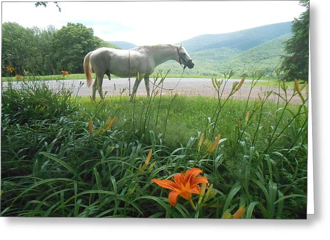 Summer Day Memories with The Paso Fino Stallion Greeting Card by Patricia Keller