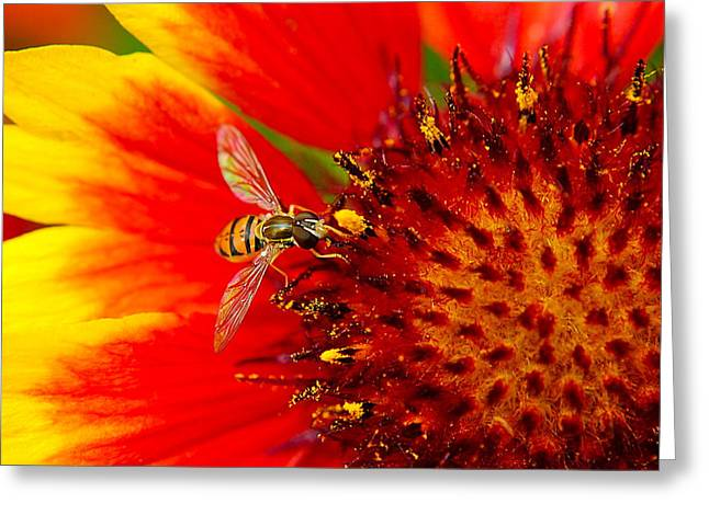 Buzz Greeting Cards - Summer Day Greeting Card by Frozen in Time Fine Art Photography