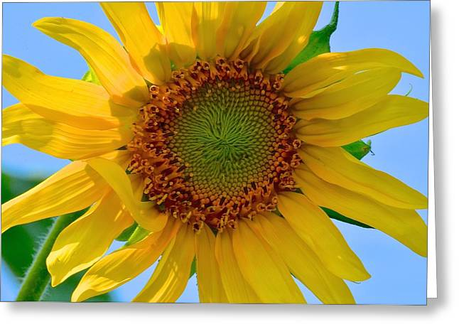 Midwest Artist Greeting Cards - Summer Days Art Here Again Greeting Card by Christine Belt