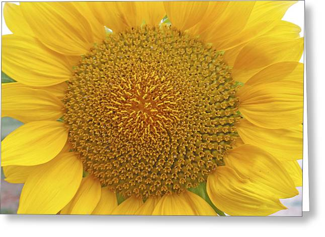 Yellow Sunflower Greeting Cards - Summer Days Greeting Card by Nomad Art And  Design