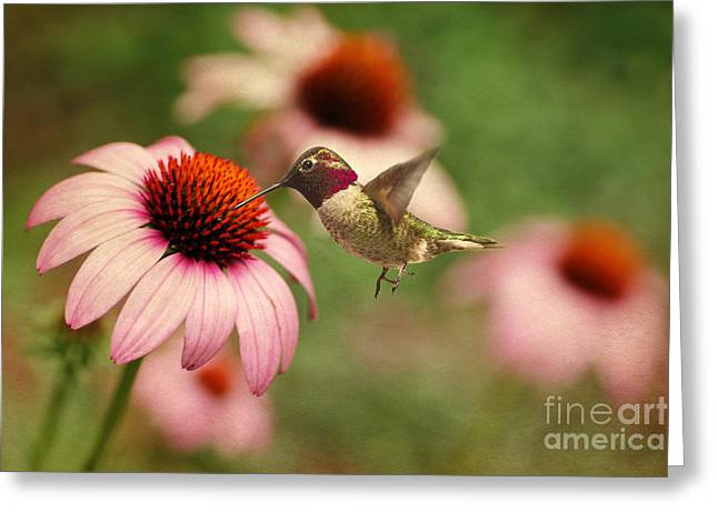 Hovering Greeting Cards - Summer Delight Greeting Card by Darren Fisher