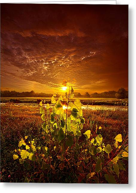Summer Dreams Drifting Away Greeting Card by Phil Koch