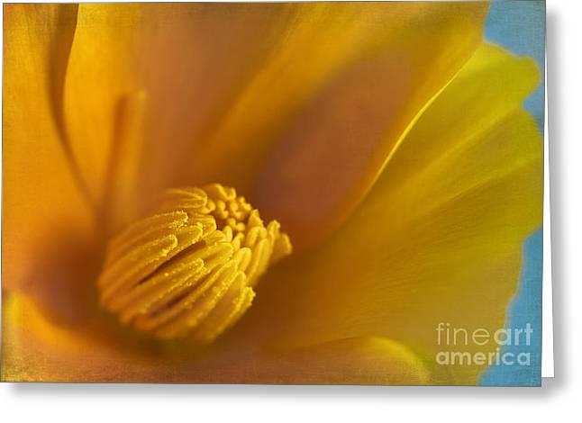 Stamen Digital Art Greeting Cards - Summer Dreams Greeting Card by Elena Nosyreva