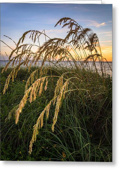 Beach Scenery Greeting Cards - Summer Dunes Greeting Card by Clay Townsend