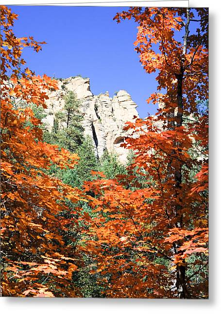 West Fork Greeting Cards - Summer Ends Greeting Card by Shannon Hastings